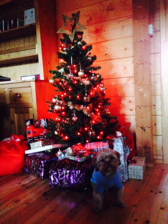 Milo\'s Christmas at Swan Lodge